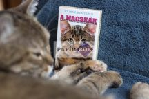 Kártyajáték Macskák